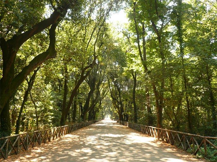 Il Bosco di Capodimonte come il Central Park di New York