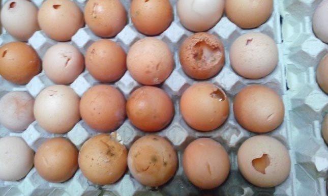 """Campania, sequestrate 28mila uova: """"pericolose per la salute"""""""