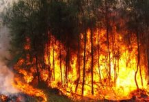 Castellammare di Stabia: bruciano duecento piante di marijuana