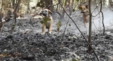 Rochi sul Vesuvio, un piccolo miracolo: ritrovati dei cuccioli