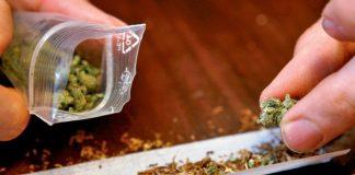 Cannabis: migliora la memoria e riduce il processo di invecchiamento