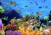 Napoli Capitale del Mediterraneo: in arrivo primo dipartimento di biotecnologie marine europeo