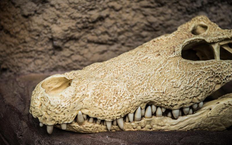 Galleria Borbonica: ritrovato il leggendario coccodrillo
