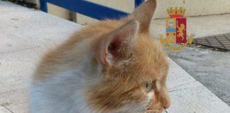 Elsa, la gattina abbandonata salvata e adotta dalla Polizia