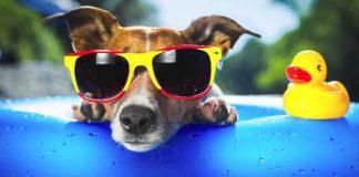 Auguri di Buon Ferragosto e buone vacanze: frasi, storia e proverbi