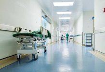 Zanzara Culex e il virus West Nile: diversi casi di decesso in Italia