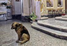 Tommy, il cane italiano che ogni giorno va a messa