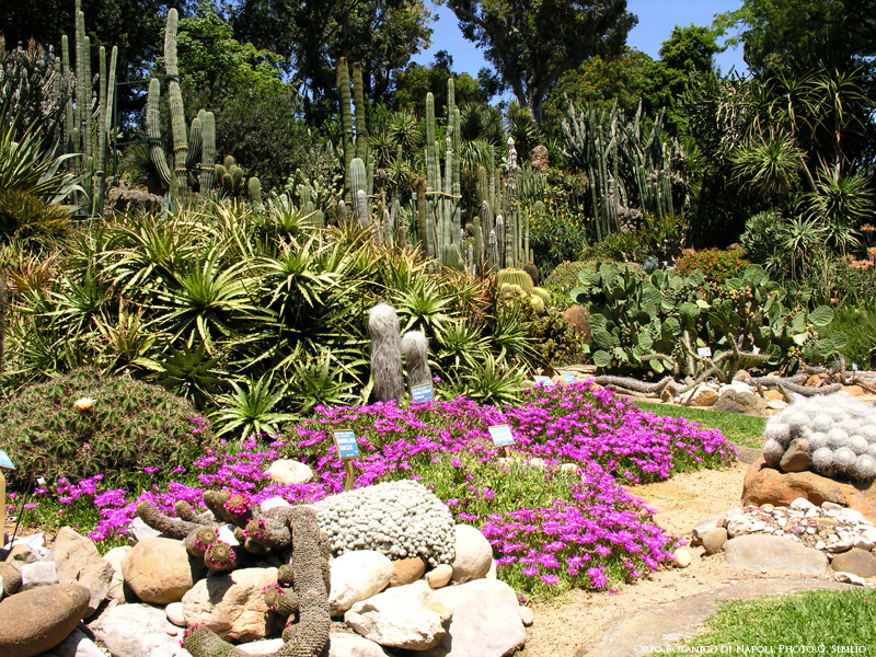 Real Orto botanico di Napoli