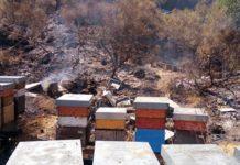 Incendi sul Vesuvio, roghi della vergogna: morti 59 mln di insetti