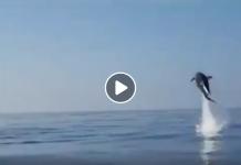 Procida, salvataggio straordinario di cuccioli di delfino (VIDEO)