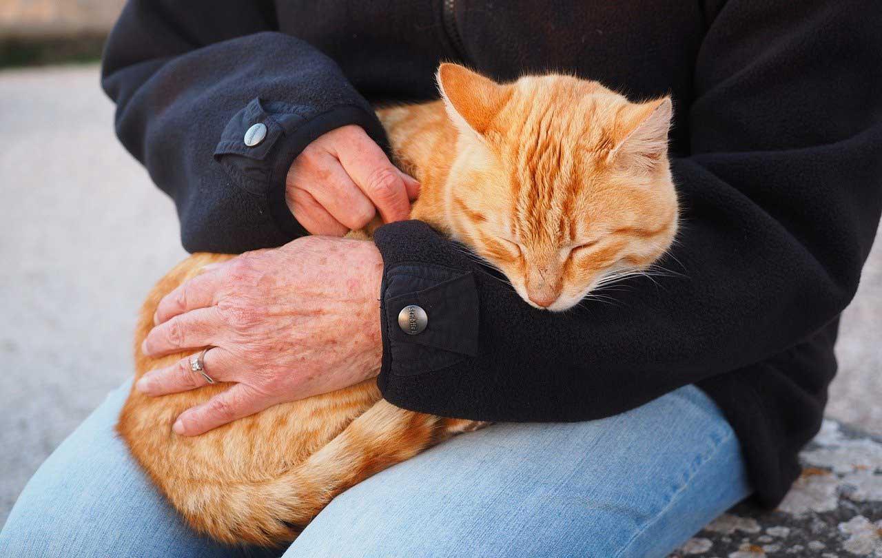 Cani e gatti fanno bene al cuore e allungano la vita