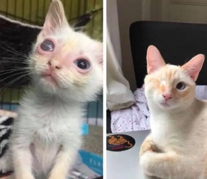 18 foto prima e dopo di gatti salvati dall'adozione