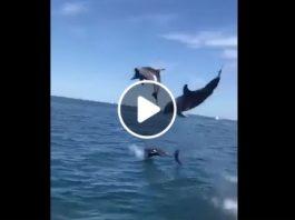 Gruppo di delfine che danza nel Golfo di Napoli