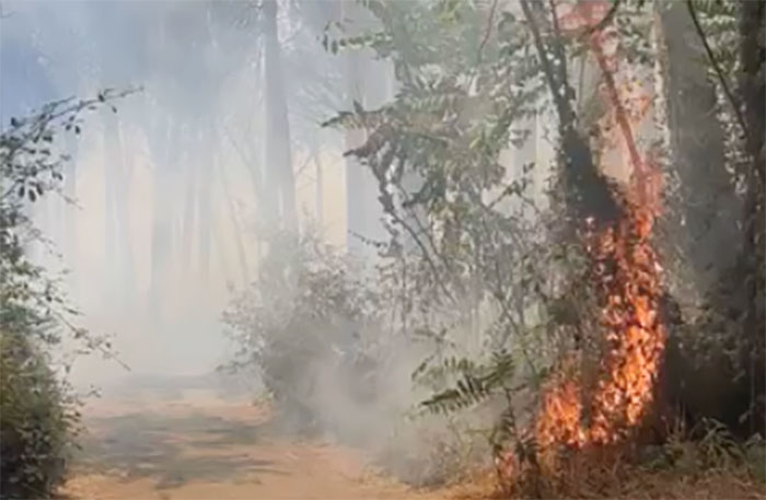 Incendio a Torre del Greco: le fiamme si estendono velocemente