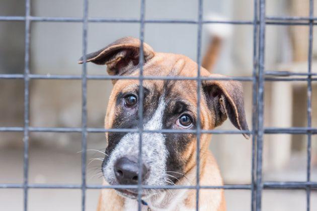 """""""Legge Angelo"""": carcere per chi abbandona o maltratta gli animali"""
